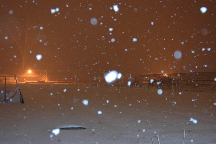 090216 1月25日の大雪.jpg