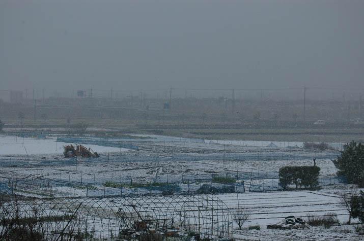 090303 再び吹雪に・・.jpg