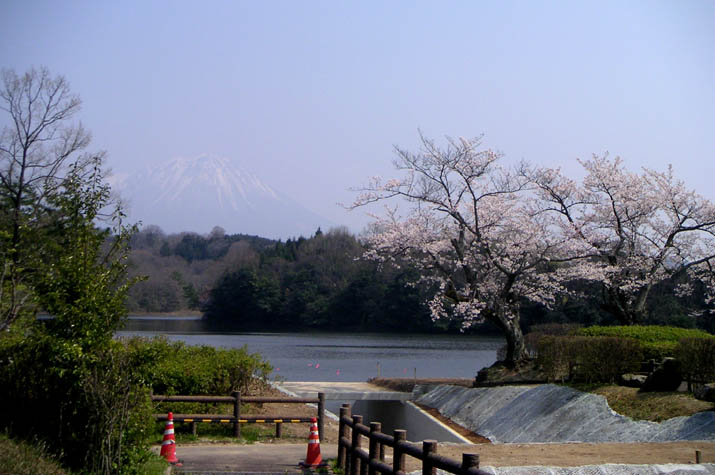 090406 岡成池の桜.jpg