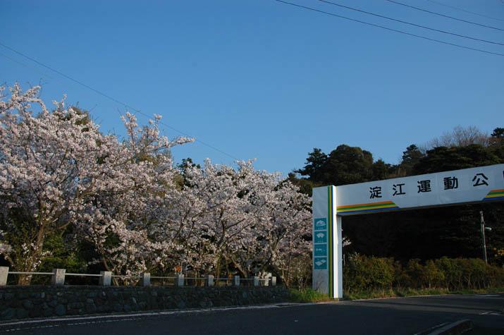 090412 淀江運動公園横の桜.jpg