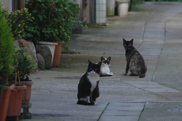 090501 路地裏の猫.jpg