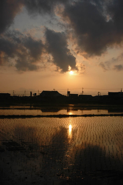 090531 田んぼに反射する夕日の光.jpg
