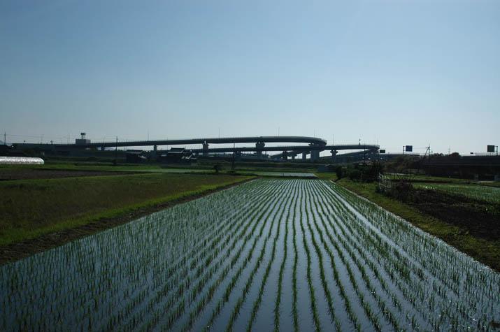 090614 米子JCTと田んぼ.jpg