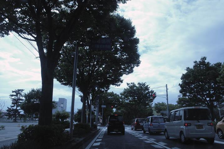 090620 緑のケヤキ並木.jpg