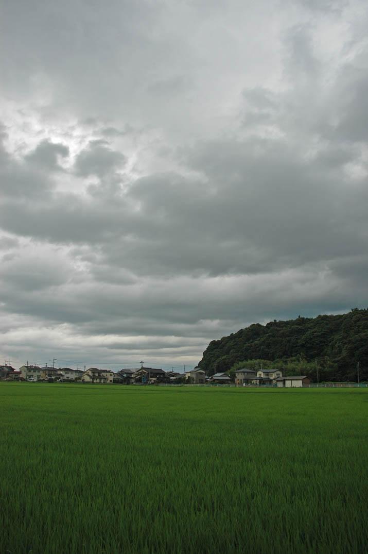 090721 雲と大きく育つ稲.jpg