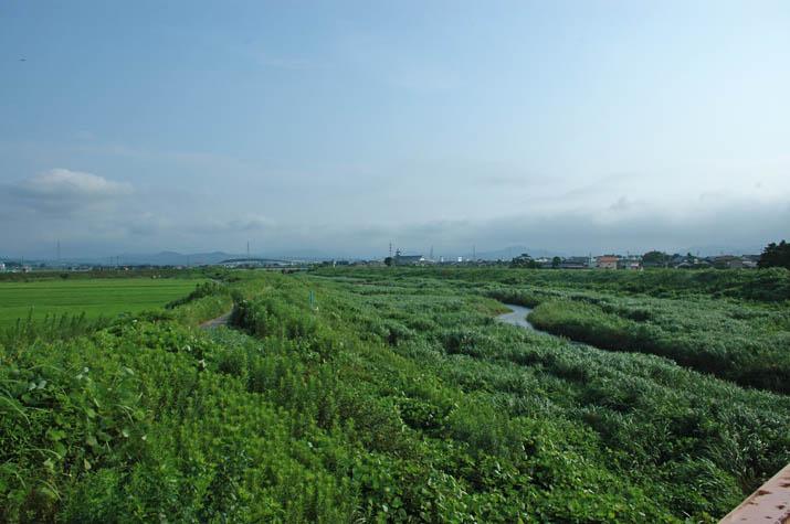090803 佐陀川に茂る草と青い空.jpg