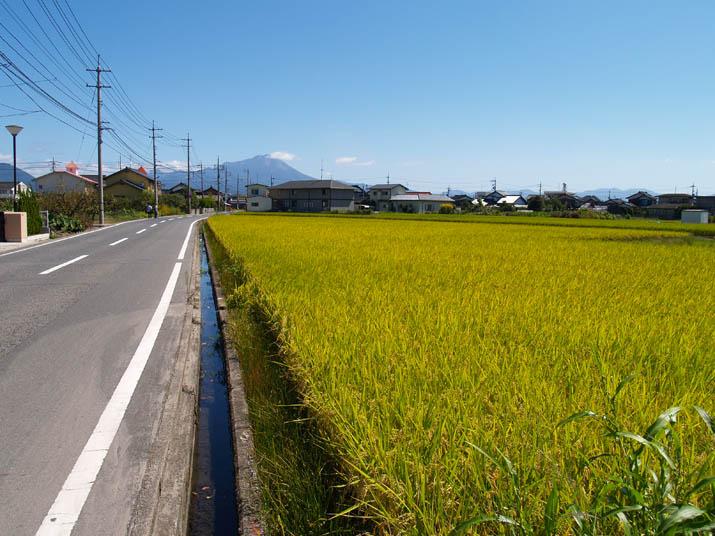 090930 中島付近の田んぼと大山.jpg
