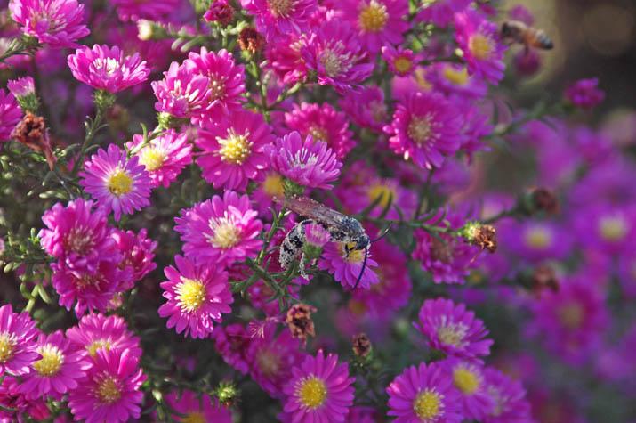 091002 ピンクの花と大きな蜂.jpg
