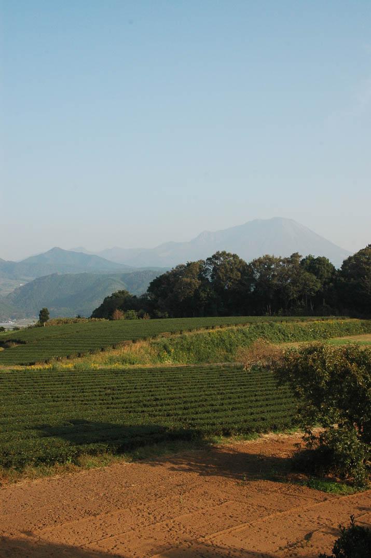 091031 茶畑と霞んだ大山.jpg