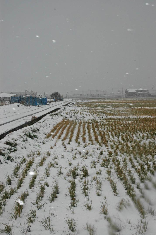 091220 田んぼの雪景色.jpg