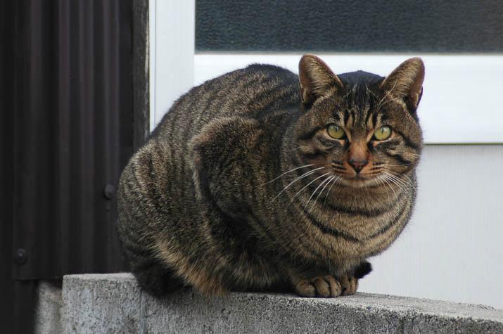 091231 トラ猫.jpg