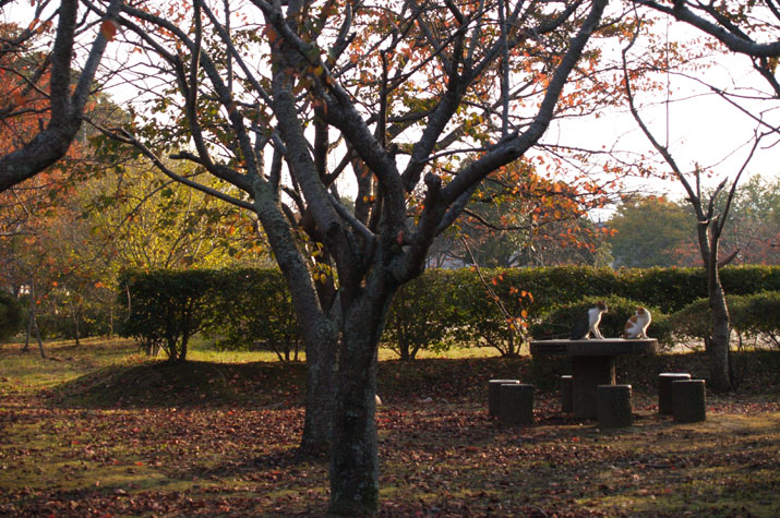 100k_010 湊山公園の落ち葉