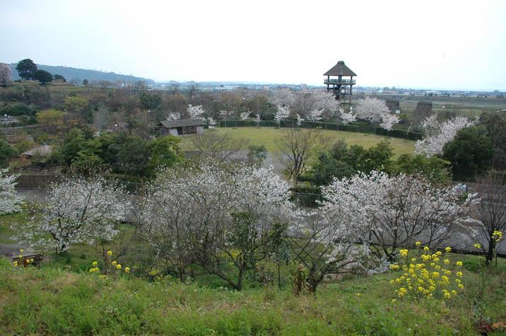 100k_020 桜咲く伯耆古代の丘公園