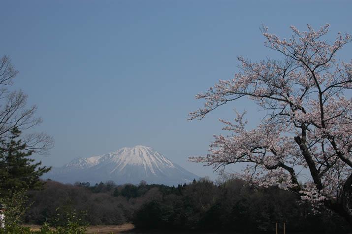 100k_021 桜と雪を残す大山