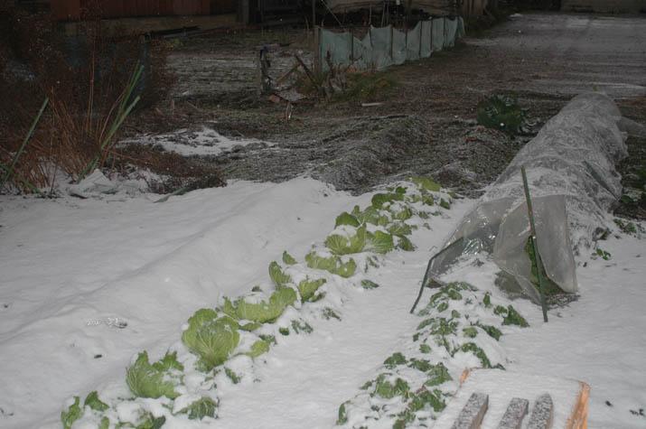 100113 畑に積もる雪.jpg
