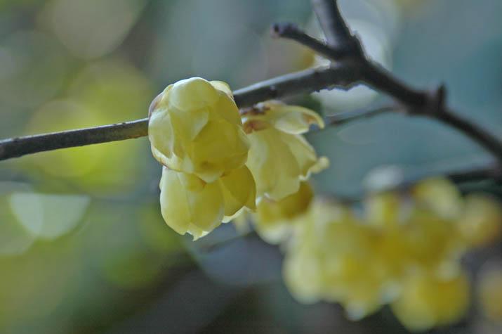 100119 黄色い花.jpg