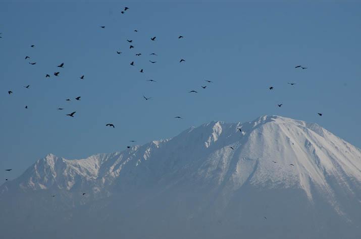 100119 大山とカラスの群れ.jpg