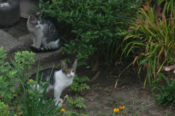 100202 のら猫たち.jpg