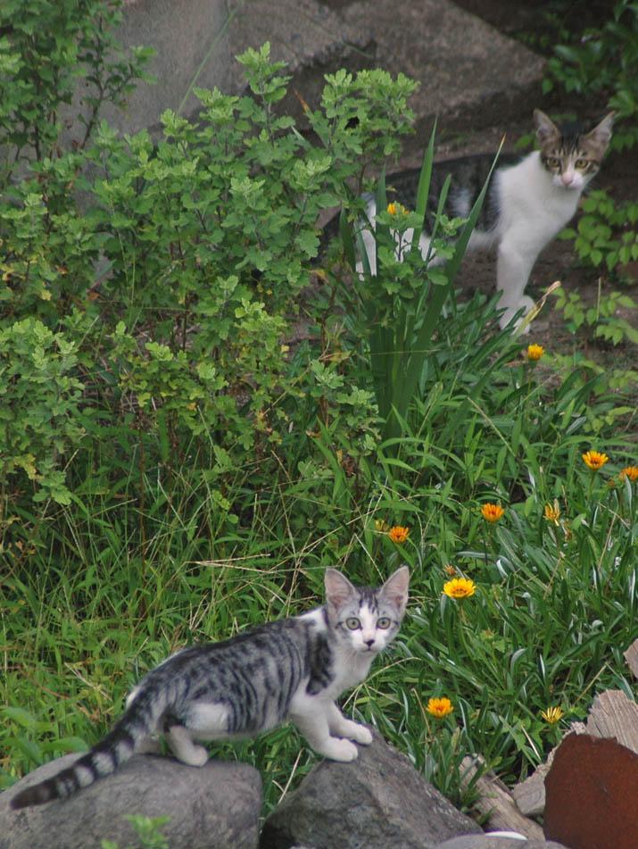 100202 猫二匹.jpg