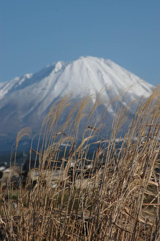 100209 ススキと大山.jpg