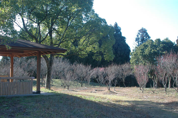 100209 尾高の梅園.jpg