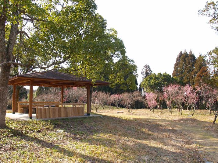100220 旧米子ハイツの梅園.jpg