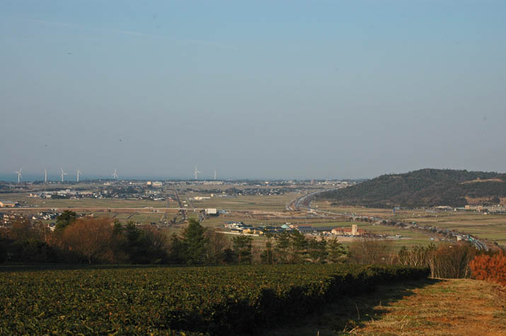 100225 茶畑と大山町.jpg