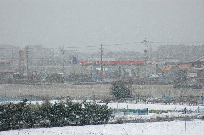 100309 激しく降る雪.jpg
