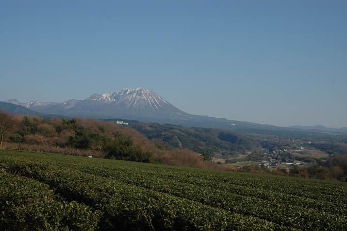 100319 茶畑と大山.jpg