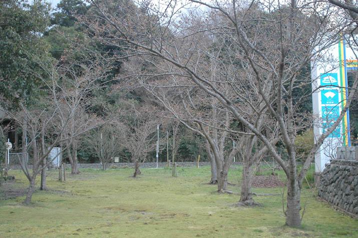 100323 日吉神社の様子.jpg