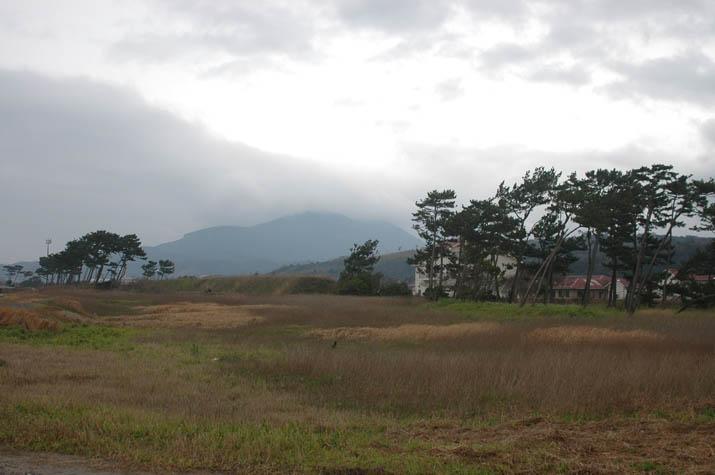 100324 海岸沿いの防風林.jpg