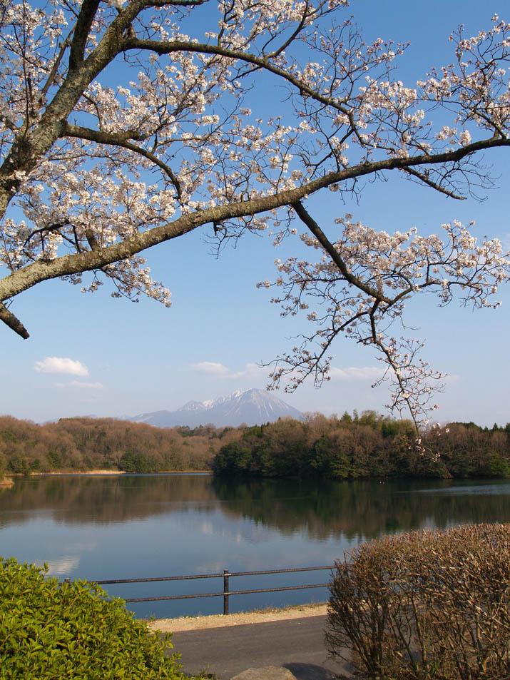 100404 桜と大山と岡成池.jpg