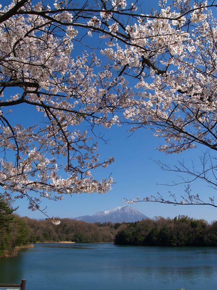 100408 桜と大山と岡成池.jpg