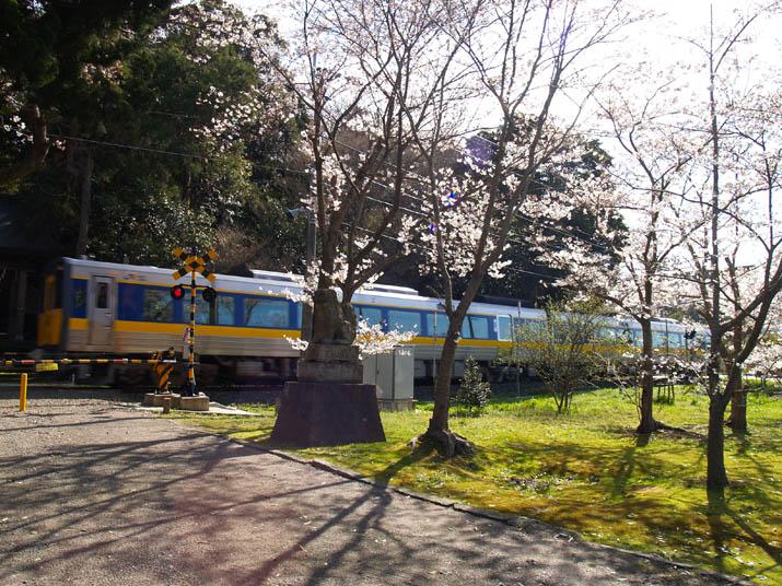 100411 桜と特急列車.jpg