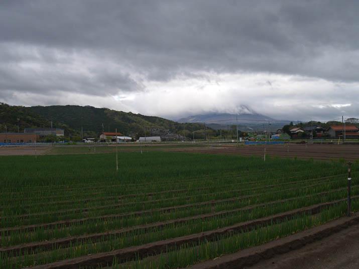100427 ネギ畑と大山.jpg