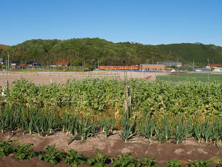 100507 作物と山陰線列車.jpg
