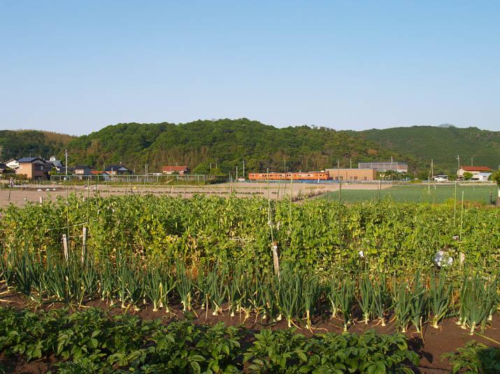 100517 畑の作物と山陰線列車.jpg