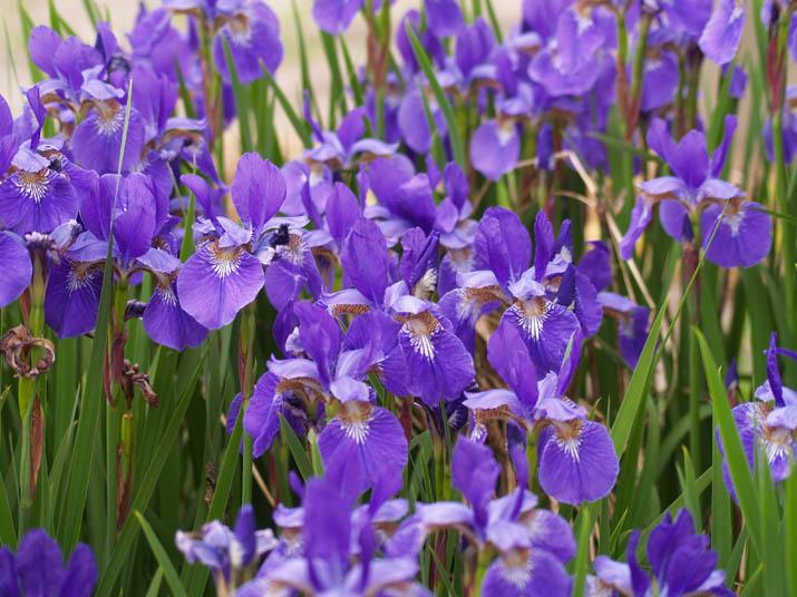 100522 紫色の花.jpg