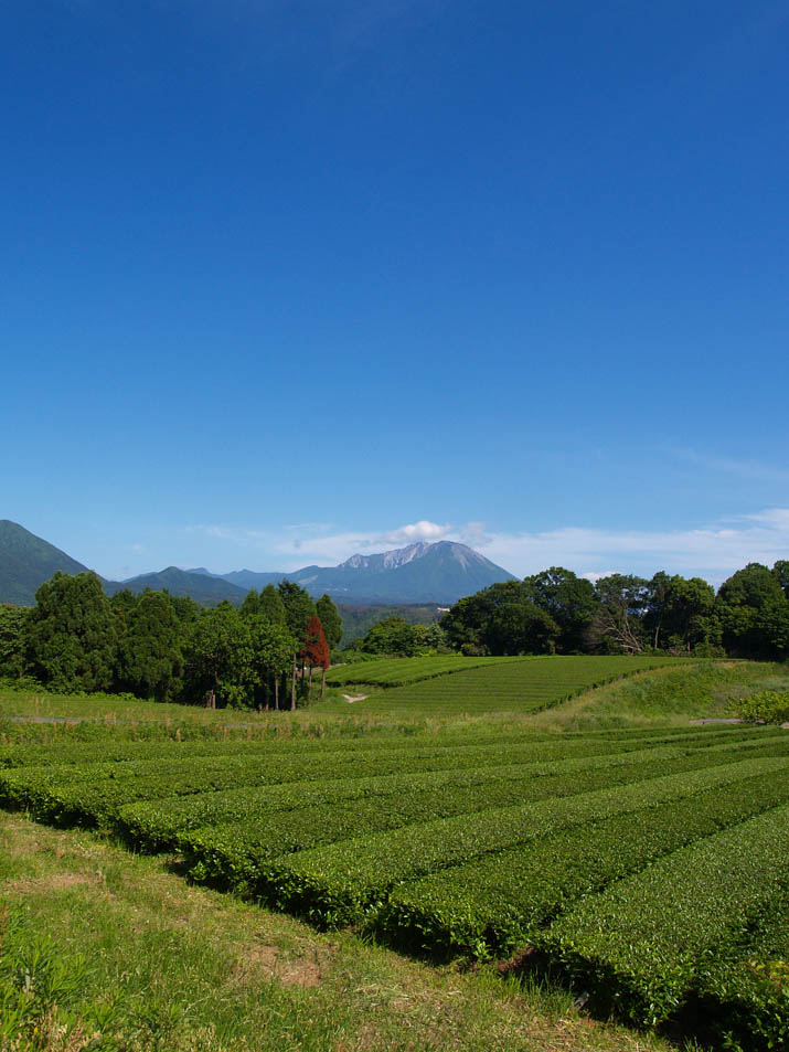 100529 壺瓶山の茶畑と大山.jpg