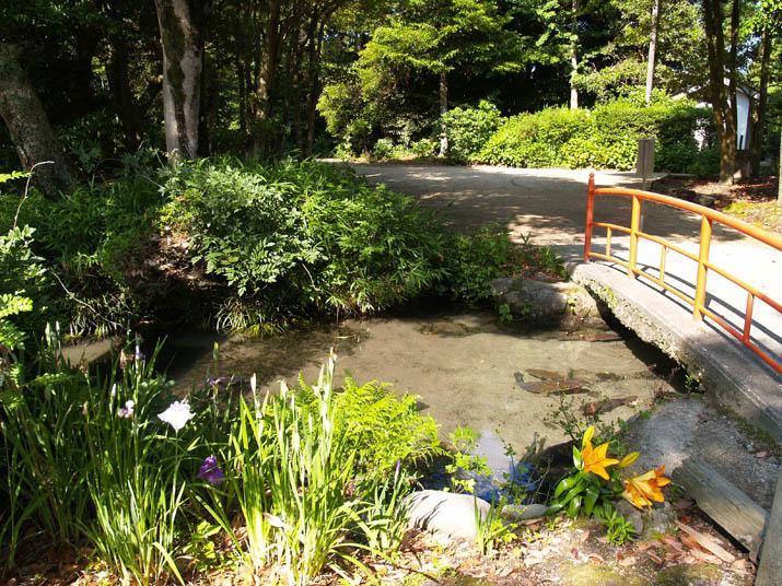 100619 大神山神社の桟橋と池.jpg
