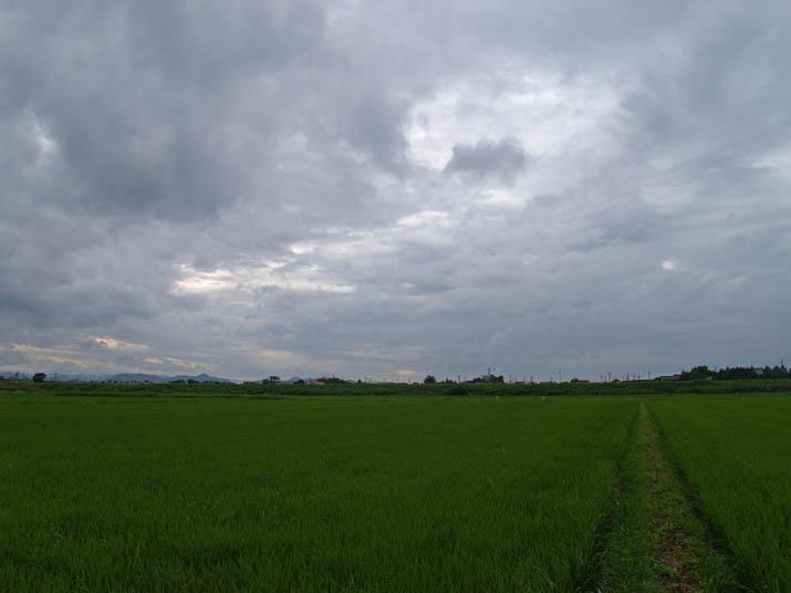 100714 緑の田んぼと雲と王子製紙.jpg