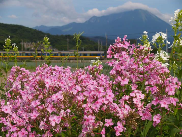 100717 花と大山と特急列車.jpg