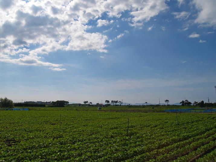 100718 夏の空と何かの畑.jpg