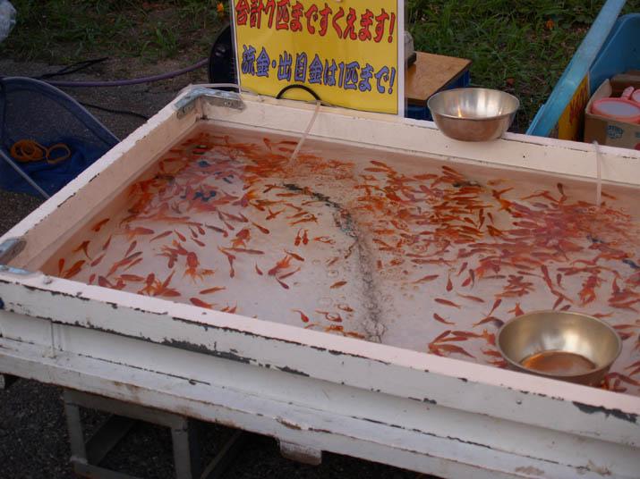 100728 金魚すくい.jpg