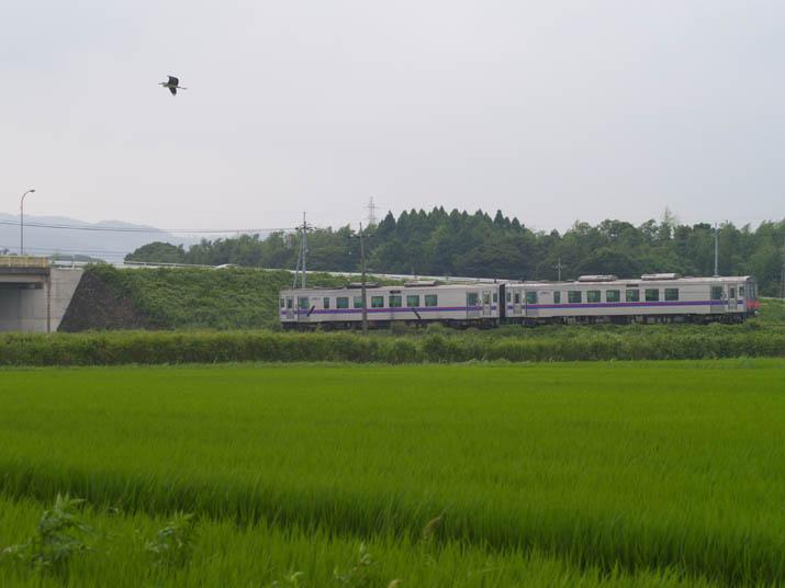 100803 逃げた鷺と山陰線列車.jpg