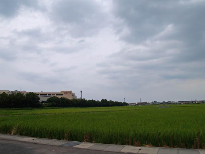 100814 ジャスコの横の田んぼ.jpg