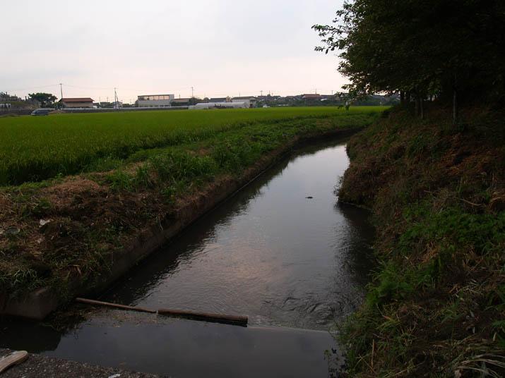 100823 農業用水と田んぼ.jpg
