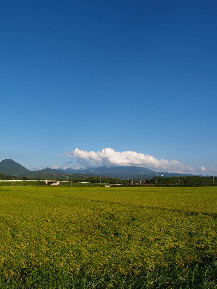 100831 色付く稲と大山と.jpg