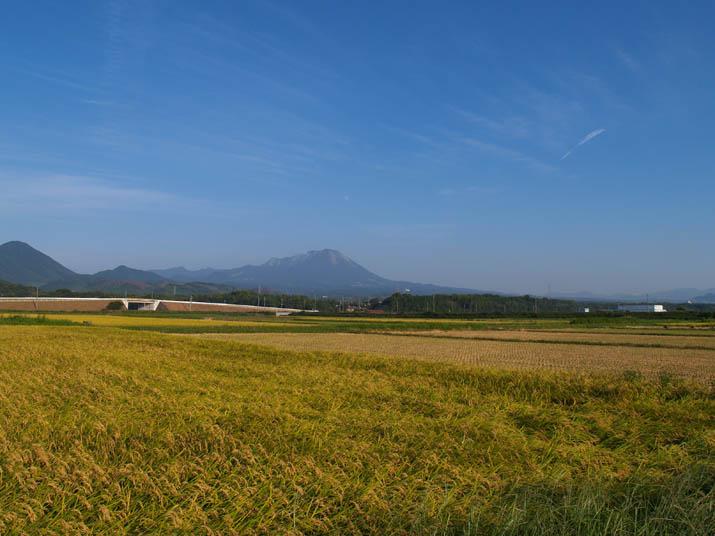 100918 大山と田んぼ.jpg