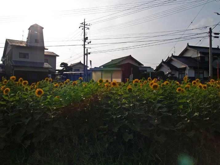100921 小波浜公民館とひまわり.jpg